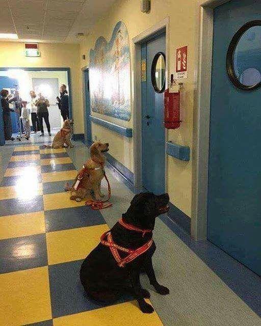 Лечебные собаки в клинике